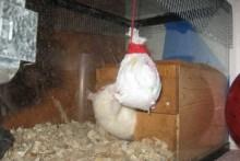 Paper-Towel-Rat-Pinata1