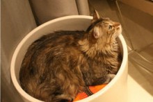 Planter-Cat-Bed