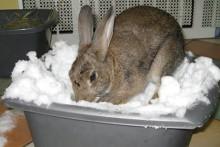 Plastic-Bin-Snow-Digging-Box