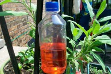 Plastic-Bottle-Butterfly-Feeder