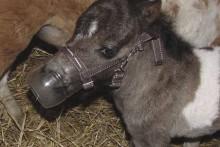 Plastic-Bottle-Foal-Muzzle