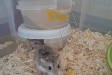 Plastic-Container-Hamster-Hide