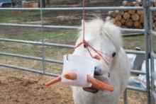 Plastic-Container-Horse-Toy