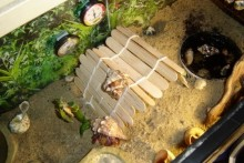Popsicle-Stick-Hermit-Crab-Bridge
