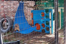 Rattan-Chair-Monkey-Swing