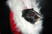 Santa-Hat-Hammock-Nest