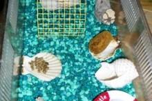 Seashell-Hermit-Crab-Furniture