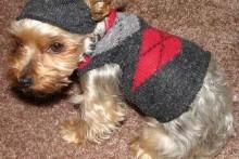 Sock-Dog-Sweater1