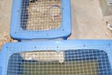 Storage-Bin-Duckling-Enclosure
