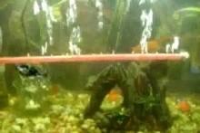 Straw-Aquarium-Bubble-Tube