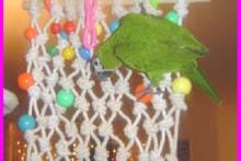 String-Bird-Climbing-Net2