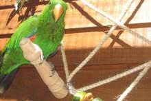 Table-Leg-Bird-Perch