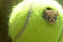 Tennis-Ball-Mouse-House