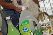 Vinegar-Soap-Flea-Shampoo