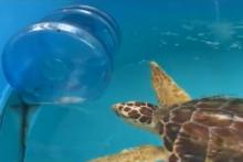 Water-Jug-Turtle-Toy