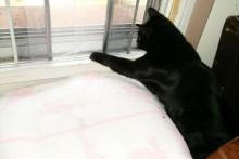 Window-Screen-Cat-Door