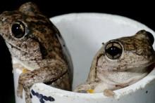 Plastic Pipe Frog Shelter