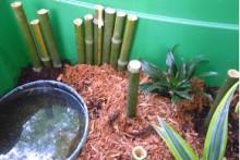 Bamboo-Stick-Terrarium-Perch