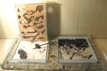 DIY-Ant-Farm-Moat