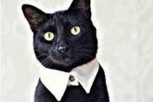 DIY Cat Dress Collar