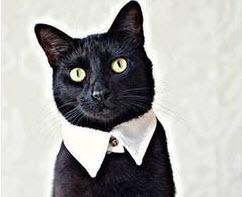 Diy Cat Collar Best Cat Cute Pictures Meme Cartoon Images