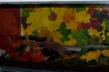 DIY-Leaf-Collage-Background
