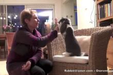 DIY Rabbit High Five Trick