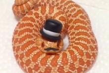 DIY-Snake-Top-Hat