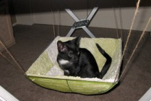 Food Tent Cat Hammock