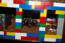 Lego-Tarantula-Burrow