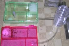 Supply-Organizer-Ant-Farm
