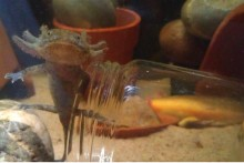 DIY-Underwater-Feeding-Jar