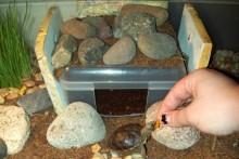 Plastic-Container-Tortoise-Burrow