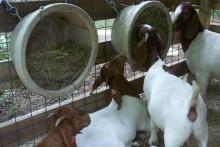 DIY-Bucket-Hay-Feeder