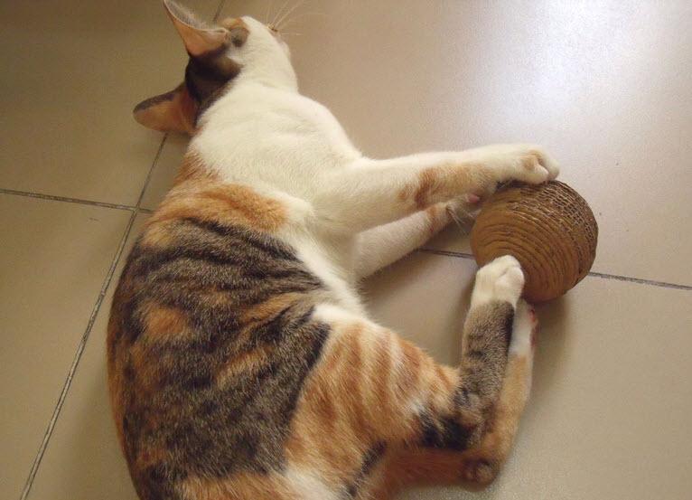 Diy Cardboard Ball Cat Toy Petdiys Com