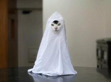 Diy Cat Ghost Costume Petdiys Com
