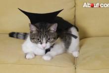 DIY-Cat-Vampire-Costume