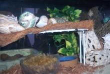 DIY-Hermit-Crab-Second-Level