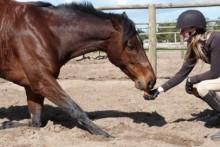 DIY-Horse-Bow-Trick