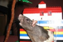 DIY-Lego-Rat-House