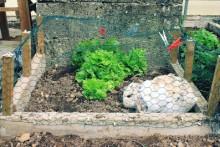 DIY-Rabbit-Garden-Enclosure