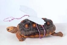 DIY-Tortoise-Angel-Costume