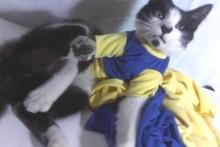 DIY-Tube-Sleeve-Cat-Shirt