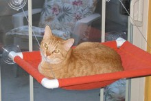 PVC-Cat-Window-Perch