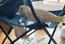 Camp-Chair-Bird-Bath
