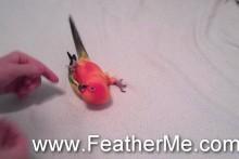 DIY-Bird-Roll-Over-Trick