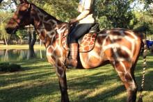 DIY-Horse-Giraffe-Costume