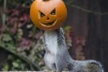 DIY-Jack-o-lantern-Squirrel-Feeder