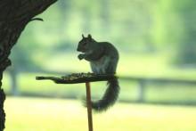 DIY-Melted-Bottle-Squirrel-Feeder
