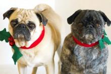 DIY-Holly-Dog-Collar